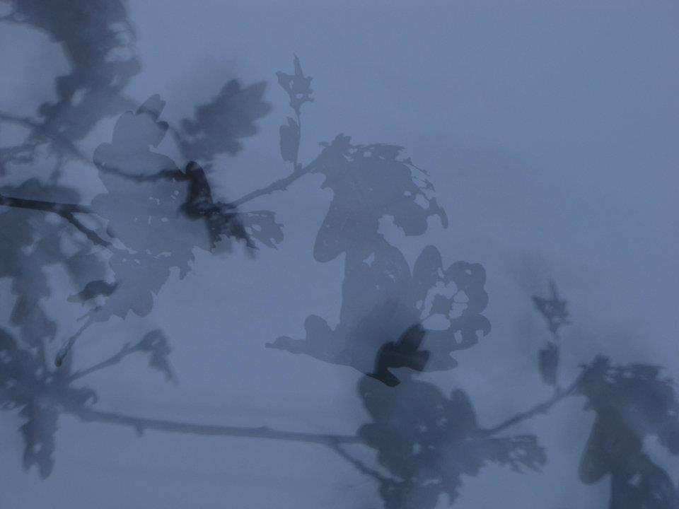Winter Leaves 2012 by TheLindseyX