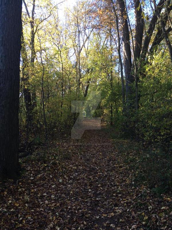 Path of Leaves. by BloodLustPyro
