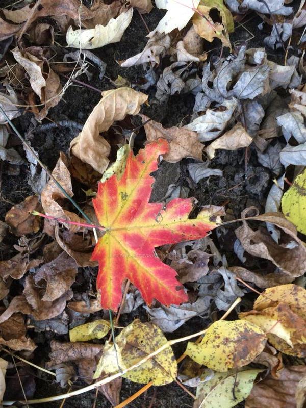 Leaf. by BloodLustPyro