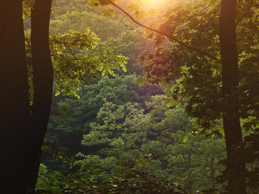 http://fc02.deviantart.net/fs70/f/2013/161/0/0/forest_by_tigressinai-d68jgq0.png