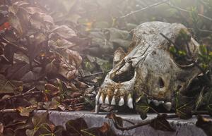 Canis Cranium by TigresSinai
