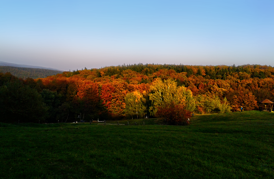 All the autumn colours by TigresSinai