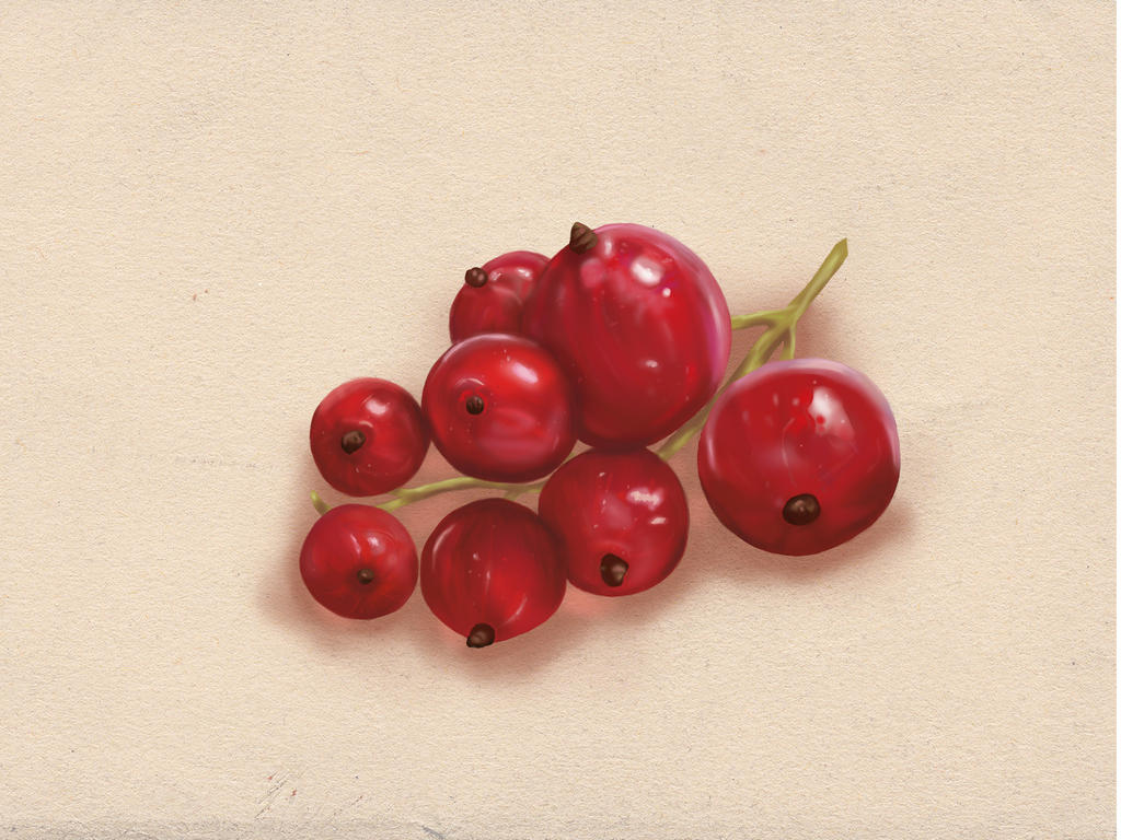 Red currant by Emeraldea