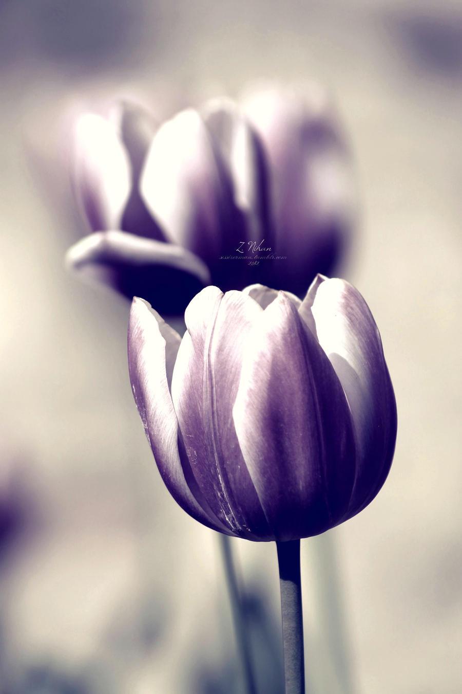 deep dark memories by limeflowery