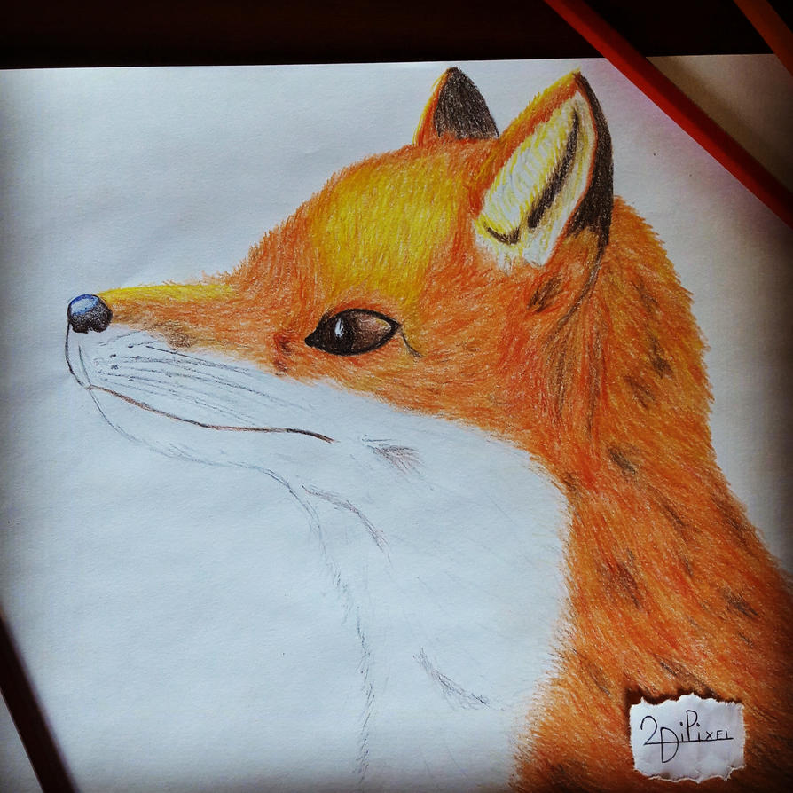 Red Fox By 2dipixel