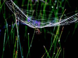 Spider guy by mcgraczu