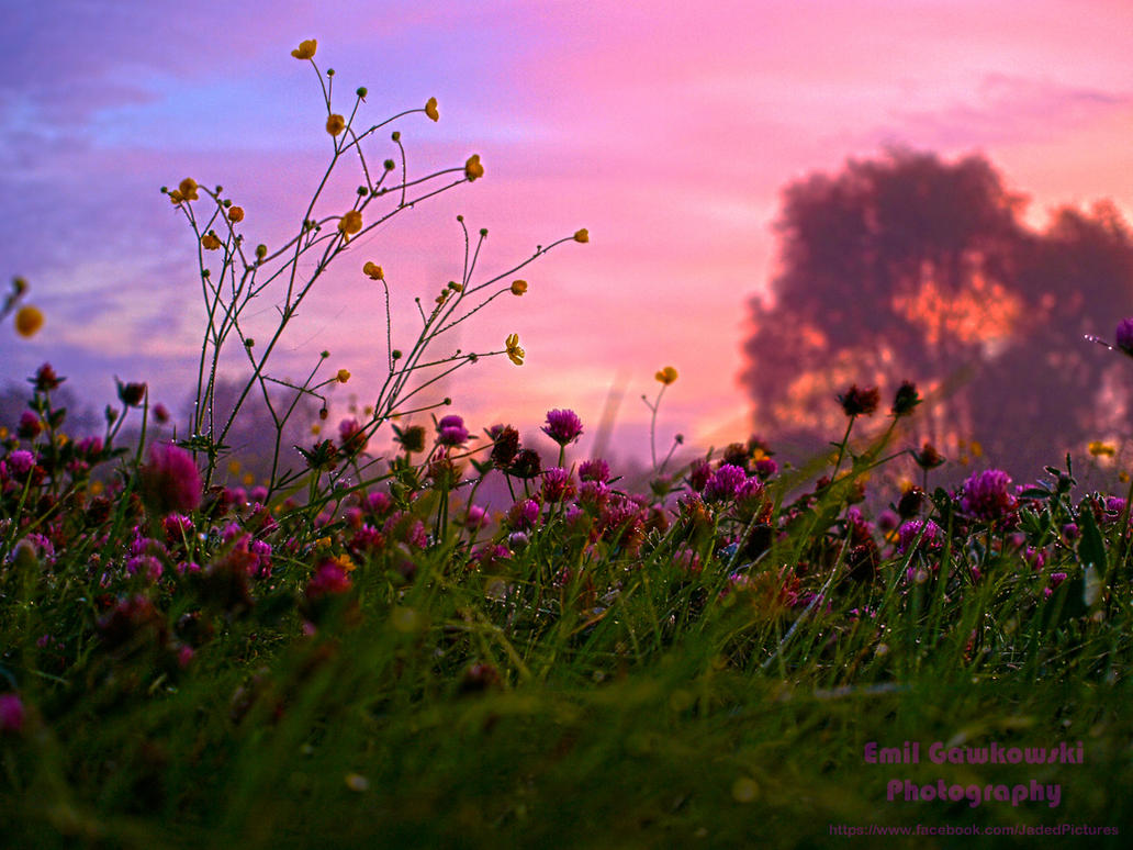 Pretty Colours by mcgraczu