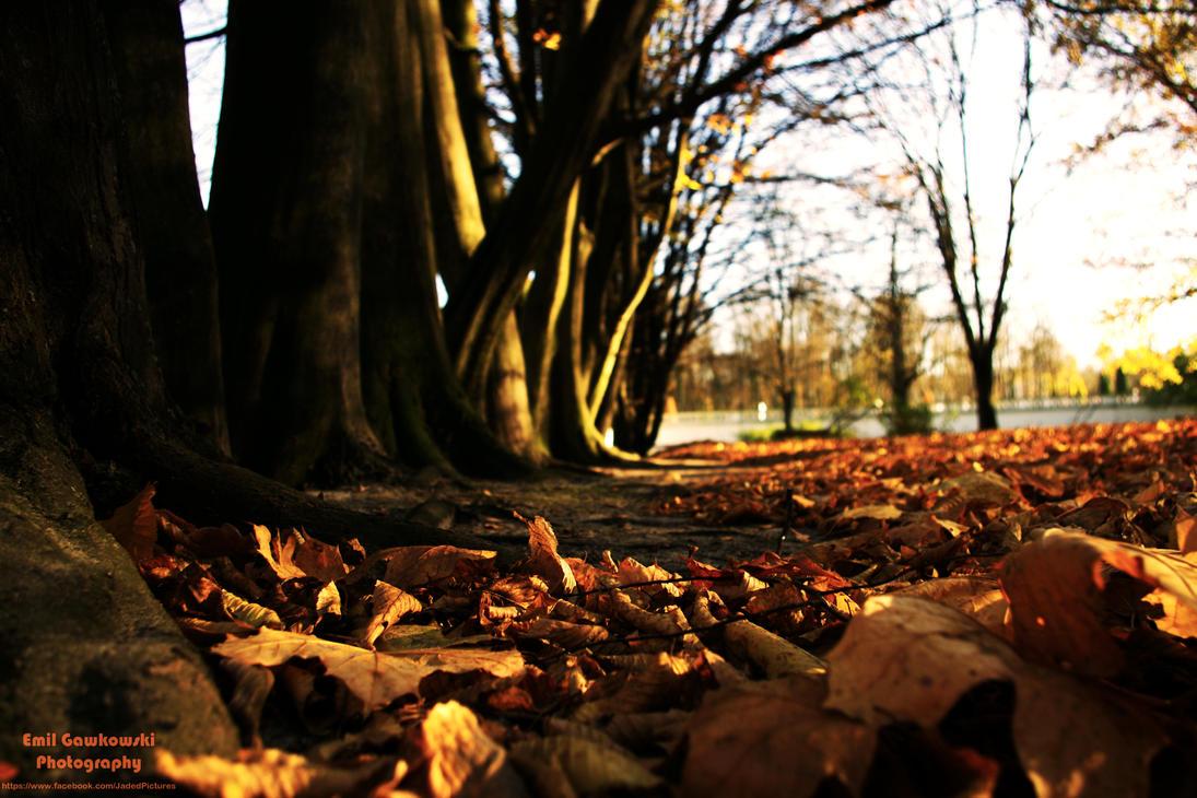 Autumn by mcgraczu
