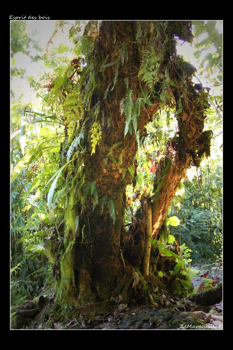 Spirit of forests by ZeMargouillat
