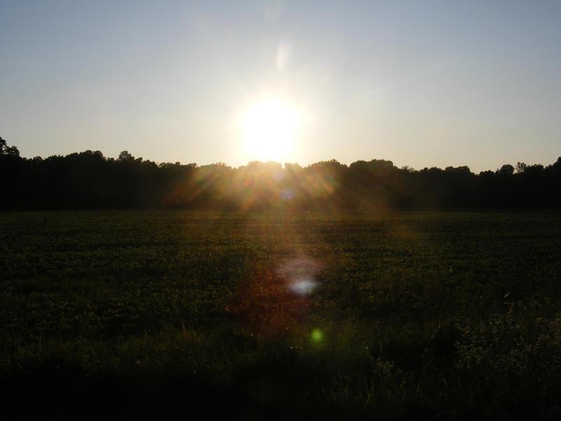Shine On by silentcrash