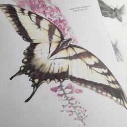 eastern tiger swallowtail by JuleeMClark
