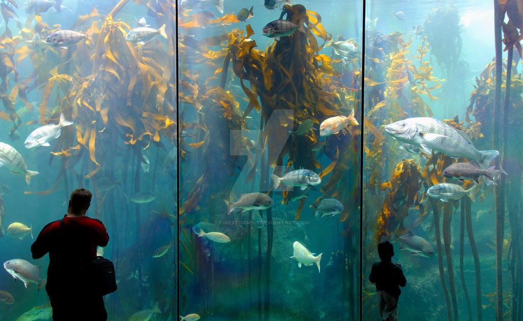 Aquarium Viewers - UShaka Kwazulu Natal South Afri by FireStorm101