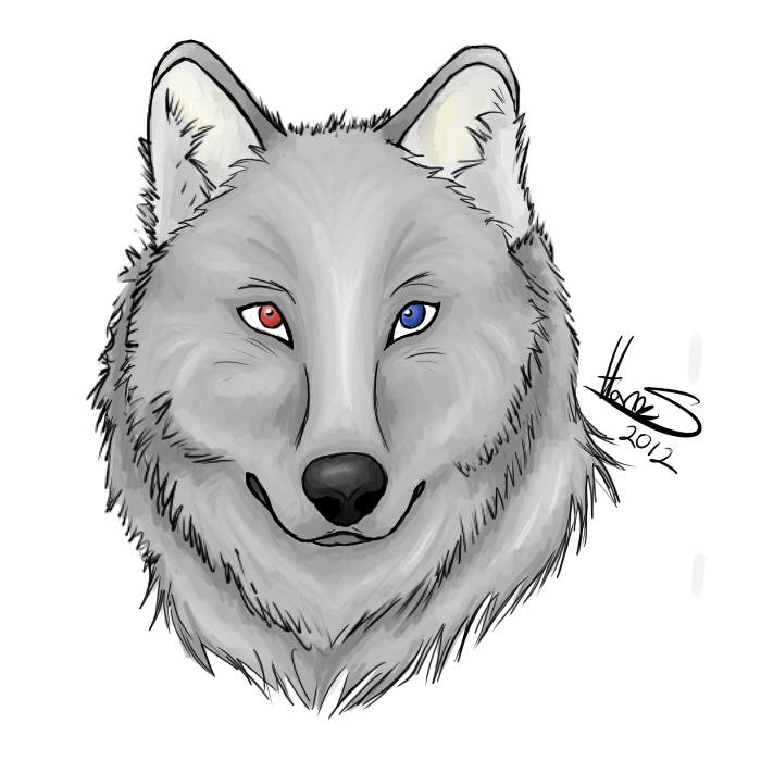 Wolf - drawing by HH-Anime-HH on DeviantArt