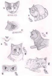 Realism Practise - Cats II by Melanch0lic-Artist