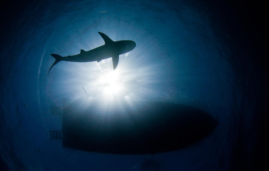 Tiger Shark Sil... Hammerhead Go