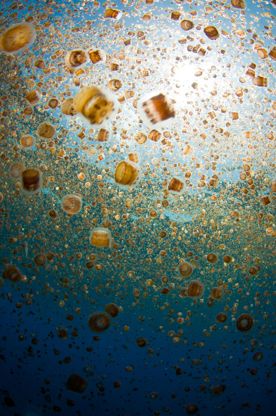 Jellyfish Bloom by leighd