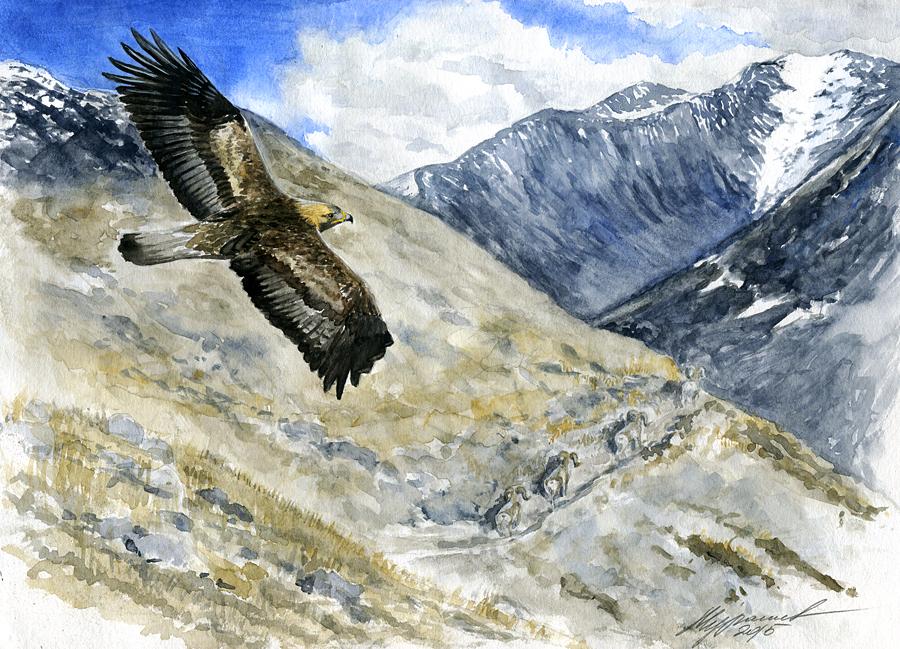 Aquila chrysaetos by IlyaMurashev
