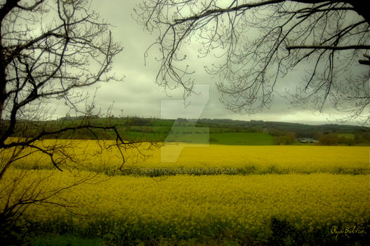 Ireland Landscape 001