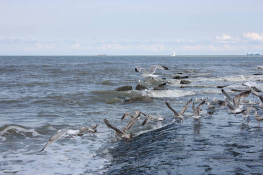 Seaguls 2