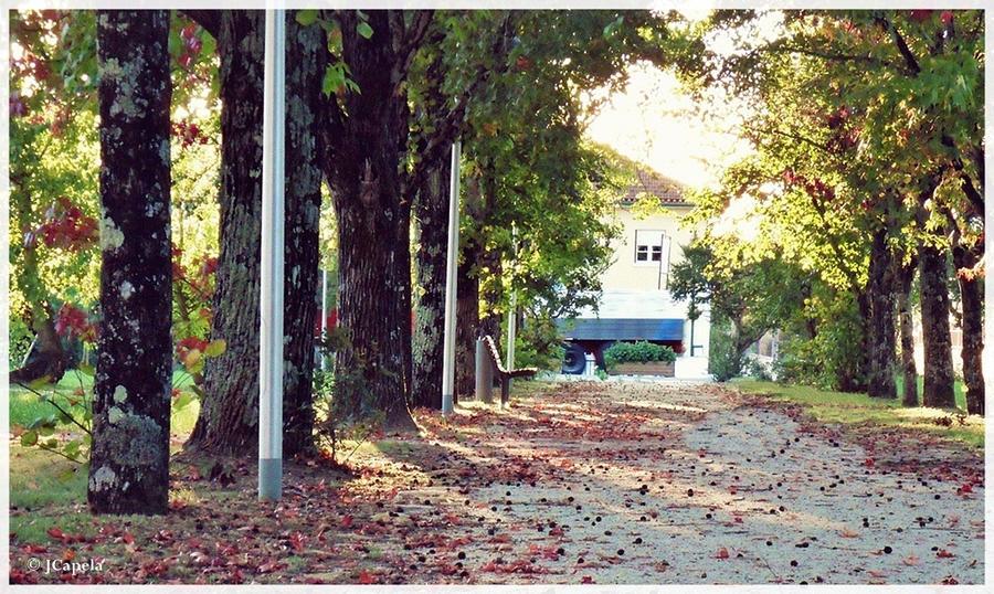 Autumn leaves by JCapela