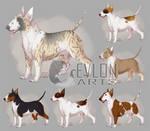 [c] Miniature Bull Terrier