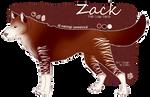 Zack Ref Sheet