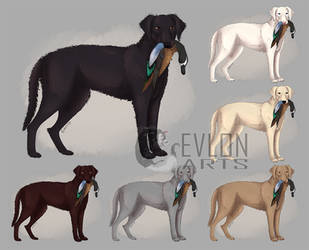 Curly Coated Retriever by EvlonArts