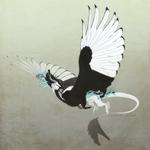 Magpie's flight