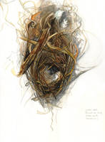Wren Nest by amwah