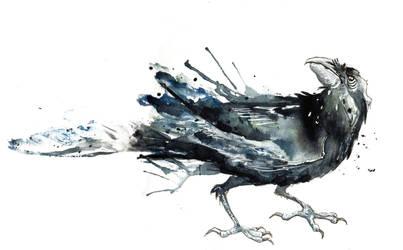 Black Crow I by amwah