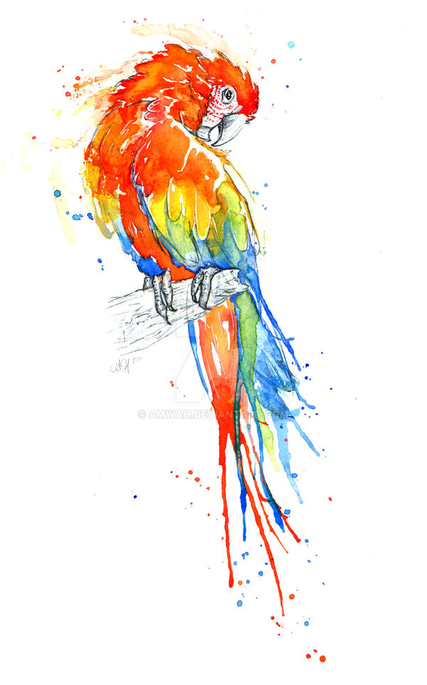 Wild Macaw Appeared by amwah