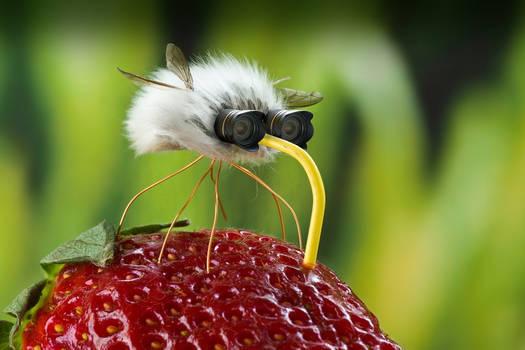 Spy fly