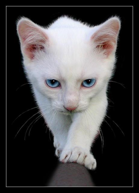My Cat by Joffi
