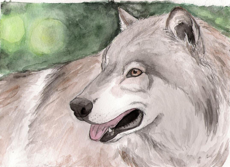 Summer wolf by WolfSoldier87