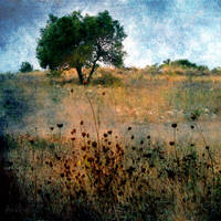 Pastoral by AnaViegas