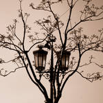 Chandeliers on Trees