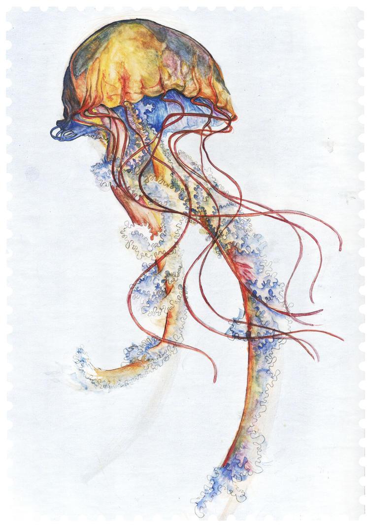 Jellyfish by rocket-child on DeviantArt