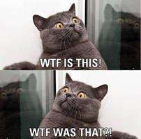 Cat Shocked by DXvsNWO1994