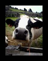 .:The Cow:. by NeBrAkAnEiZzAr