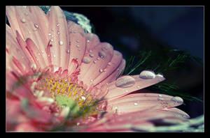 flower................... by Beautiful-Disgrace