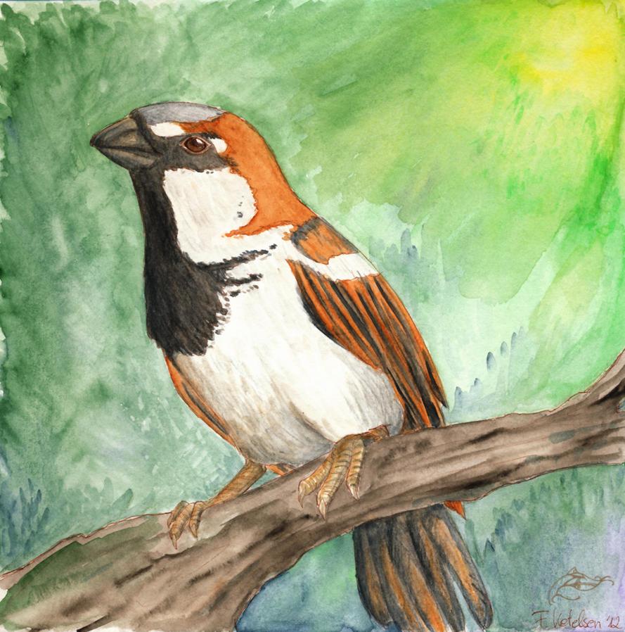 House Sparrow by Talyr