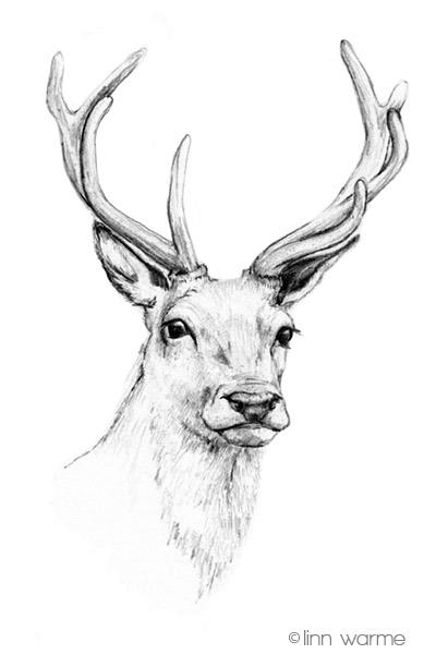 deer head by linnwarme on deviantart. Black Bedroom Furniture Sets. Home Design Ideas