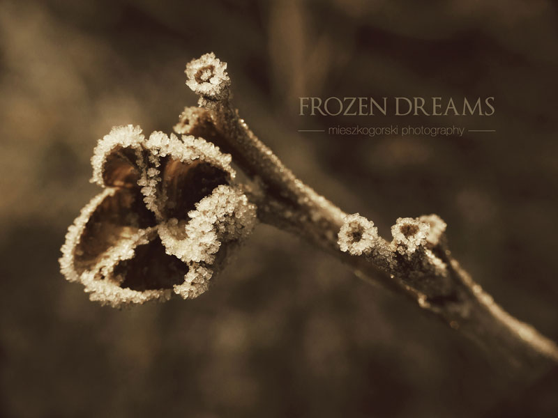 1. Frozen dreams by mieszkogorski