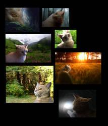 Lionstripe's Quest by RockpeltThunderClan