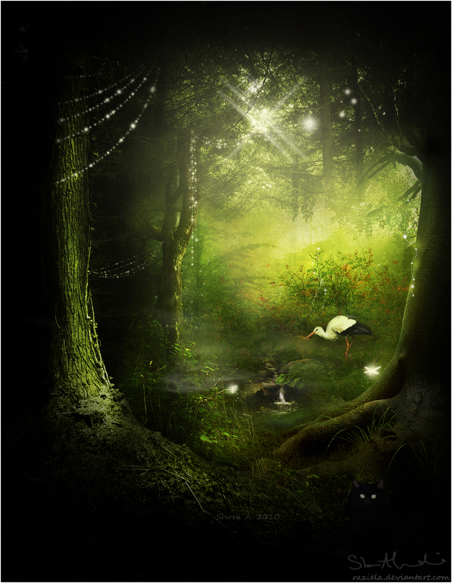 Calming Forest by raziela