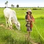Cambodian Cowgirl