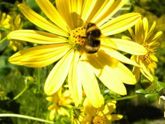 Bee Season by manu666tb