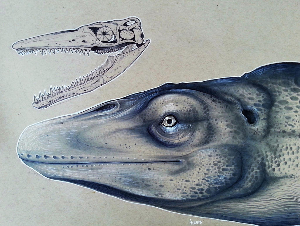 mosasaurus_reconstruction_by_shon2_dcmst