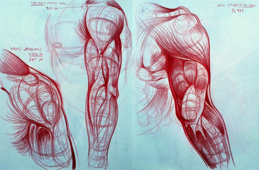arm_study_by_shon2_dctn4yj-fullview.jpg?