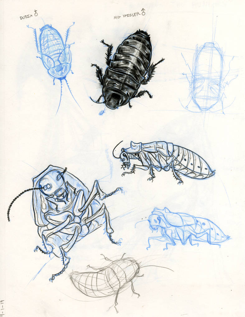 roach_studies_by_shon2_ddfhrdy-pre.jpg?t